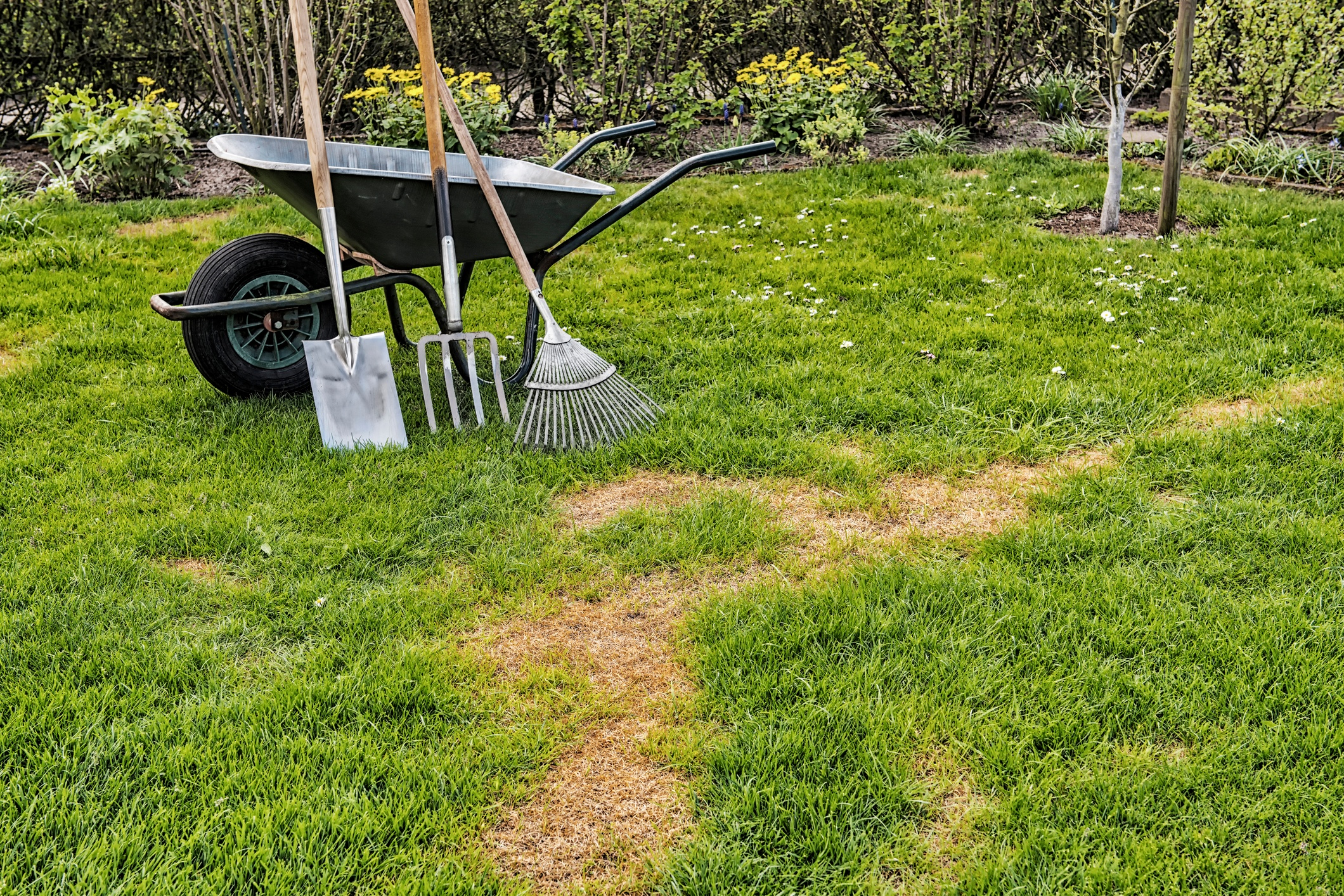 repair-or-renovate-lawn.jpg
