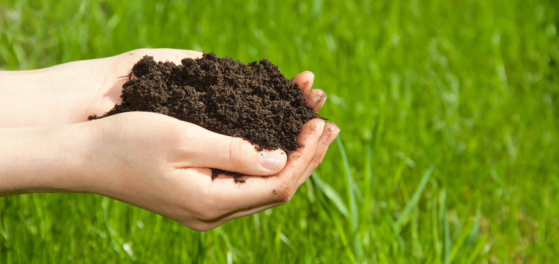 Improve Your Soil With Topdressing - Featured Image